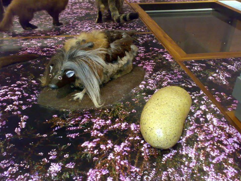 Wild haggis Kelvingrove Museum